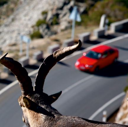 wildlife_highways_wwf_spain