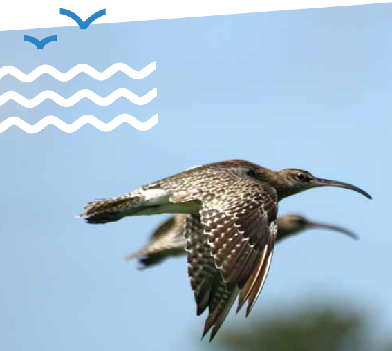 the_status_of_waders_and_coastal_seabirds-en-web